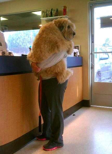dog hugging its owner